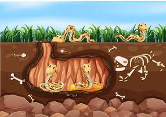 A Snake Family Living Underground