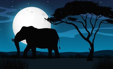 Silhouette Elephant in Savana Night