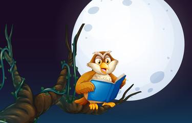 An Owl Reading a Book