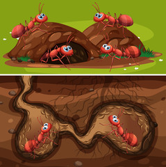 Fire Ants in the Nest
