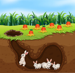 A Rabbit Family Living in Hole