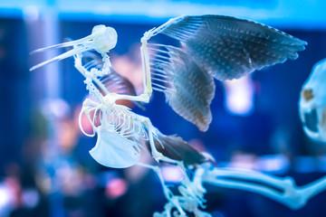The skeleton of a bird. Anatomy of a bird.