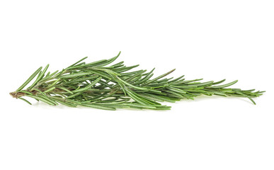 Green sprig of rosemary isolated on a white background