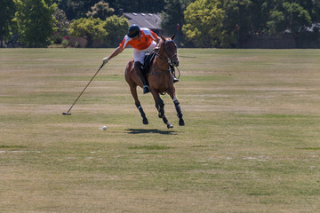 A polo player in an orange jersey leans to the right side of his brown horse to hit the white ball. The horse is galloping toward the camera. In the background is a house and shrubs.