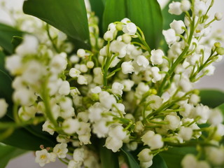 Wall Murals Lily of the valley muguet