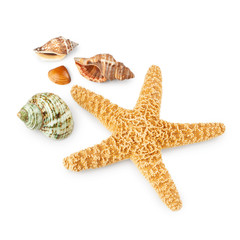 Seashells and starfish isolated on white background