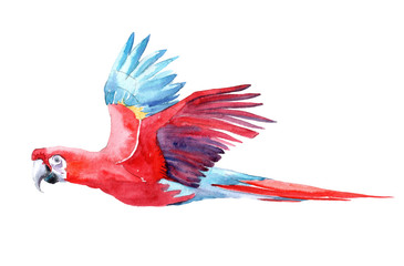 Isolated watercolor clipart with parrot.