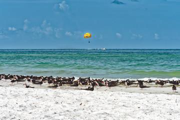Parasailing along the beach and bird nesting area