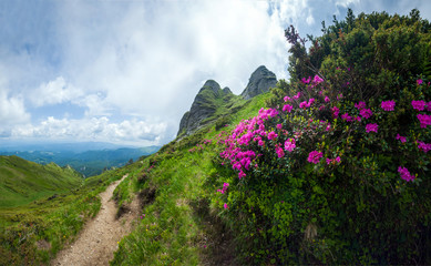 Panoramic view of Mount Ciucas on summer with wild rhododendron flowers
