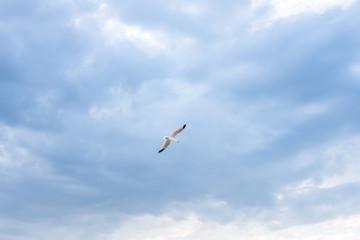Seagull flying over blue sky