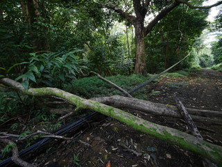 tree fall on electric cables in nature after tropical storm