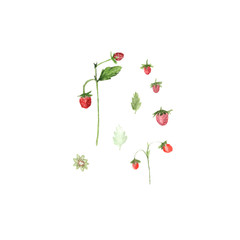 Watercolor illustration of strawberries isolated on white background