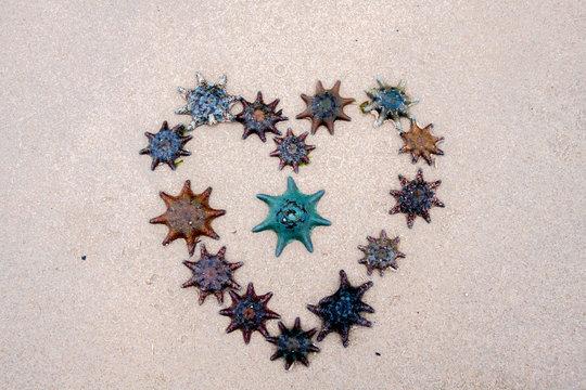 Seastars on the Sand