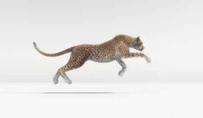 A beautiful cheetah running on white background