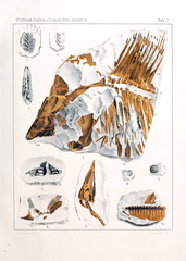 Illustration of fossil fish.