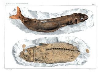 Illustration of fossil fish.