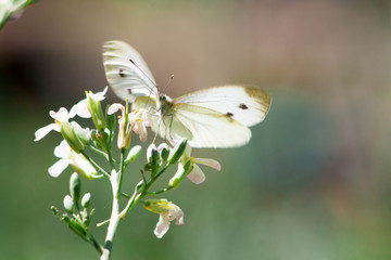 Wild meadow grass and butterfly in spring in nature macro