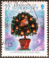 Christmas partridge on a pear tree on stamp of Guernsey