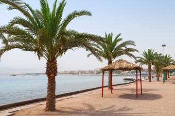 Aqaba beach view with palm trees