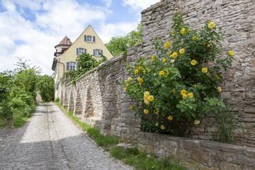 Sulzfeld am Main-Stadtmauer mit Rosenstock
