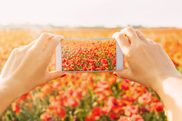 Woman taking photo of poppies meadow with smartphone.