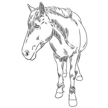 Vector image of an horse on white background. Outline sketch illustration of beautiful horse portrait one line