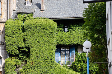 old house  with tree creeper in France