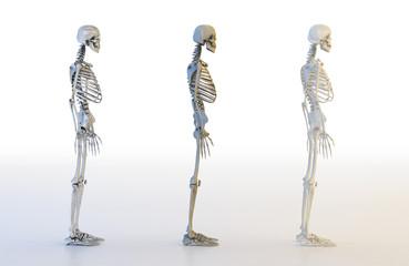 Human skeleton set. 3D illustration