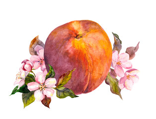 Peach fruit, blossom flowers. Watercolor