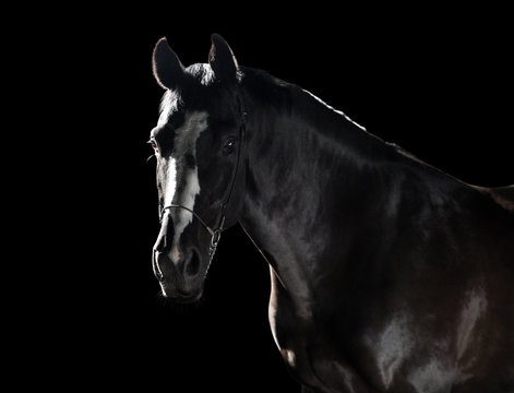 Portrait at black horse with white line on the face isolated on the black background