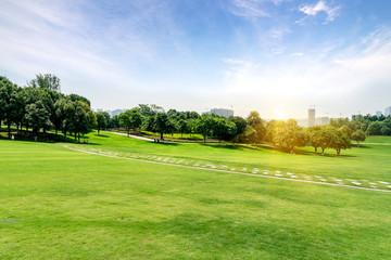 Green lawn in urban public park