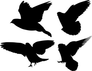 isolated black silhouettes of four pigeons