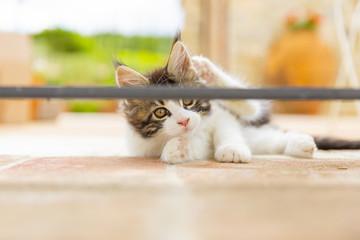 gattino gioca in campagna