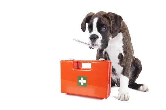 sick dog first aid box