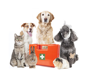 many animals first aid box