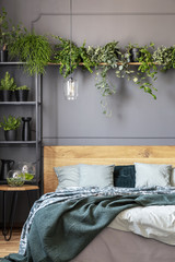 Plants above wooden bed with green blanket in grey bedroom interior with lamp. Real photo