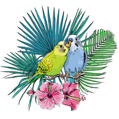 Two Beautiful little green and blue Wavy Parrots kiss on a Tropical leaves and flowers background. Vector illustration.