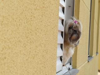 cão na janela