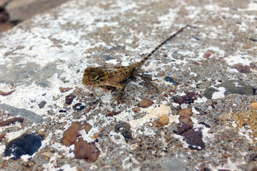 cute little baby gecko on stone surface