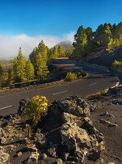 Road in the volcanic landscape, island of La Palma, Canary Islands, Spain