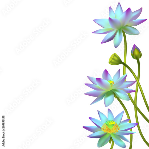 Lotus Flowers Floral Background Water Lily Buds Petals Vector