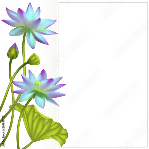 Lotus Flowers Floral Background Water Lily Buds Invitation