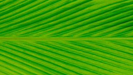 Fototapete - detail of green leaves texture - background