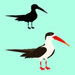 black skimmer bird vector illustration flat style  silhouette