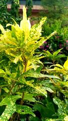 Beautiful garden Leaf