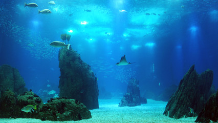 Fishes swimming in large seawater aquarium.