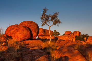 Fototapeta Devils Marbles at sunset. Northern Territory, Australia obraz