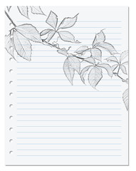 Notebook sheet in ruler with black-white pencil drawing of virginia creeper leaf