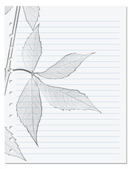 Notebook sheet in ruler with black and white pencil drawing of virginia creeper leaf