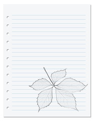 Notebook sheet in ruler with monochrome pencil drawing of virginia creeper leaf
